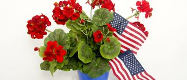 4th July Flowers Baskets 06